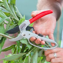 Ratchet Secateurs