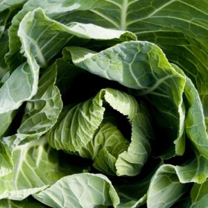 Spring Green Cabbage April (10 Plants) Organic