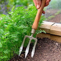 Hand Weeding Fork with 22cm Cherry Handle